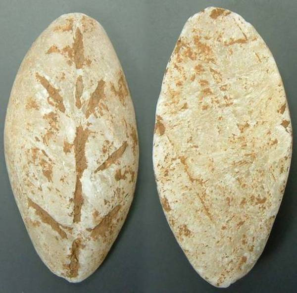Chinese Stone Cowrie - Calcite